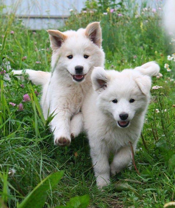 Bianchi cuccioli
