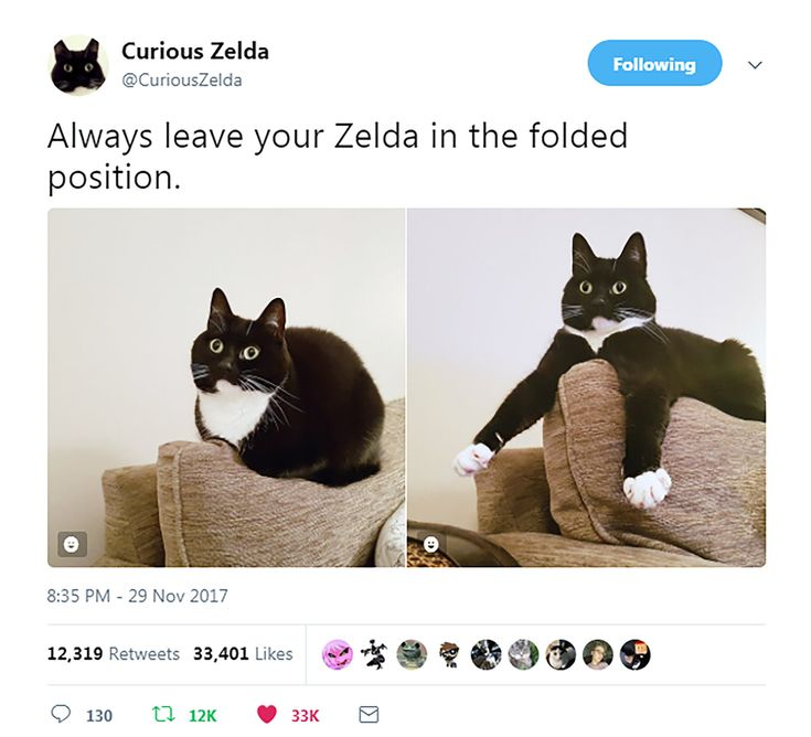 """From lonely hearts, to a social media star! After being adopted from us in 2014, Zelda has captured the hearts of thousands of Twitter followers & we couldn't be prouder of her ❤️  Check out Zelda's hilarious photos, short poems & cat-isms here👉 @curiouszelda #AdoptDontShop"""