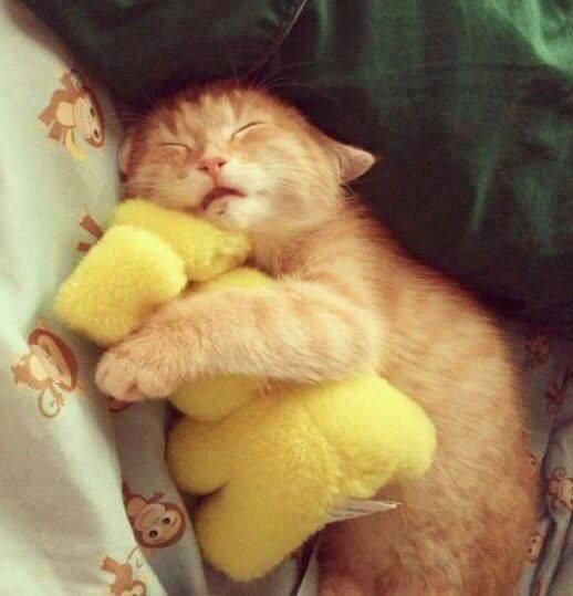Kitten with its snuggy!