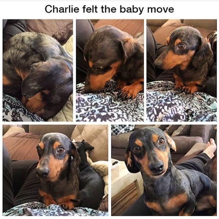 Best Funny Pictures Of Dogs Ideas On Pinterest Pictures Of - This dog has some serious self control that will make you laugh