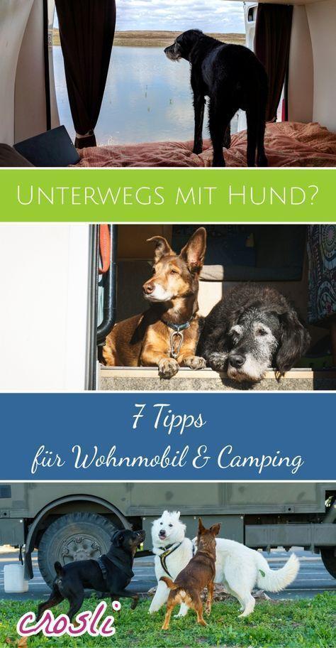 Mit Hund im Wohnmobil Urlaub machen: 7 Tipps