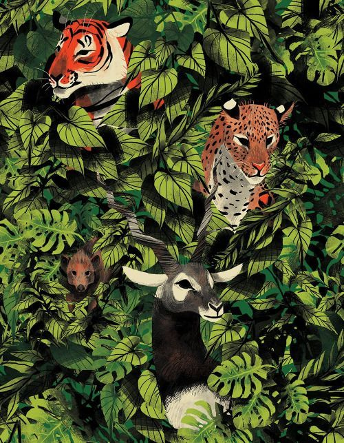 Jungle Animals illustration Wilderness