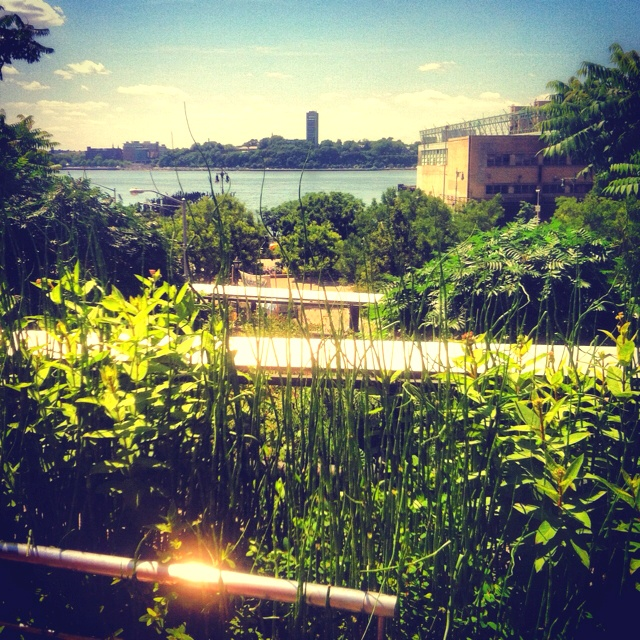 Highline NYC ☀