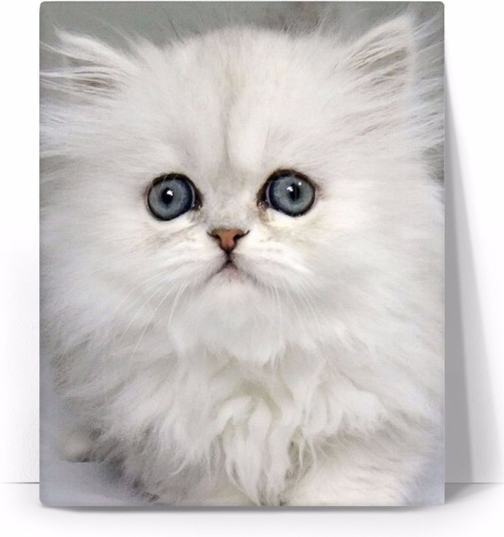 Check out my new product https://www.rageon.com/products/white-kitty-cat-art-canvas-print?aff=BWeX on RageOn!