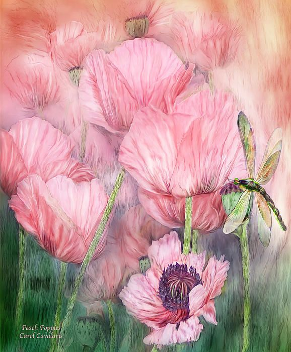 Carol Cavalaris Dragonfly On Peach Poppies