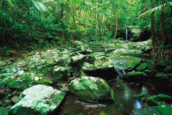 Creek in Daintree National Park, Port Douglas Holiday with us! http://www.executiveretreats.com.au