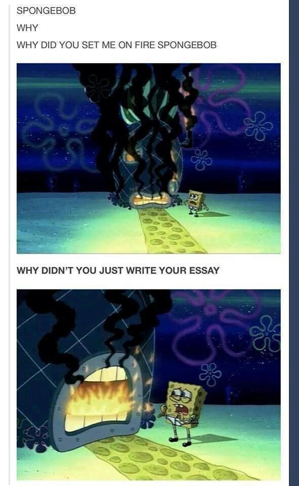 why spongebob why essay