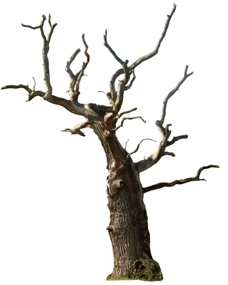 Dead tree 02 png by ~gd08 on deviantART