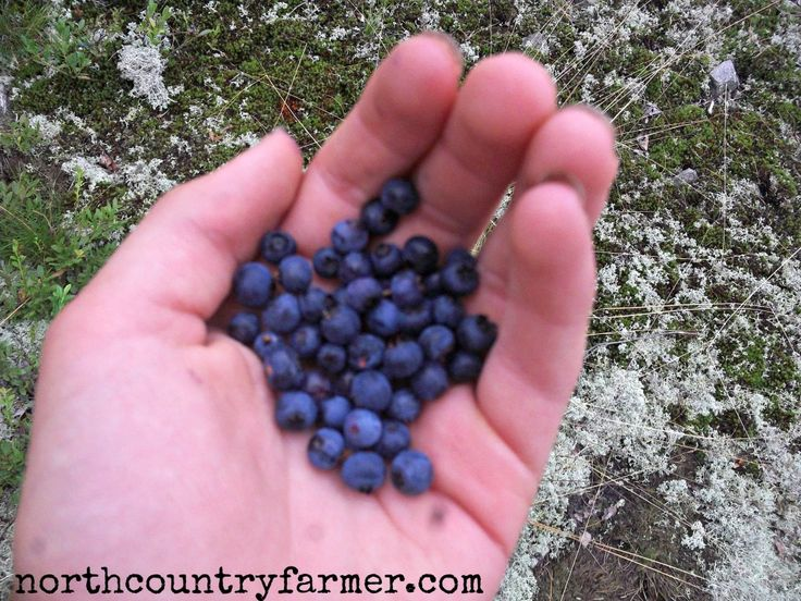 115 best images about DTS Skills ~ Feral Food Foraging on ...