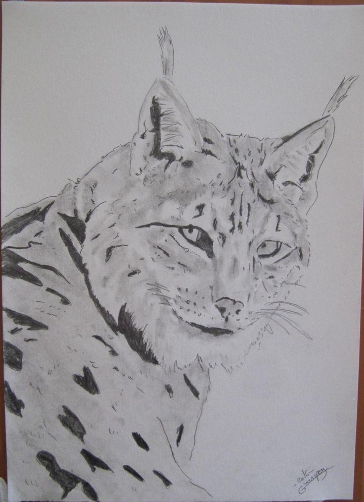 """dessin crayon animalier animal sauvage portrait fine art A4 """"lynx boreal"""" de la boutique vanspeygalleryart sur Etsy"""