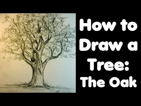 How to draw an oak tree                                                                                                                                                      More