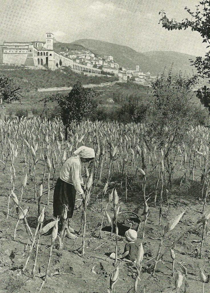 Piantagioni di grano ad Assisi, National Geographic, marzo 1940   #TuscanyAgriturismoGiratola