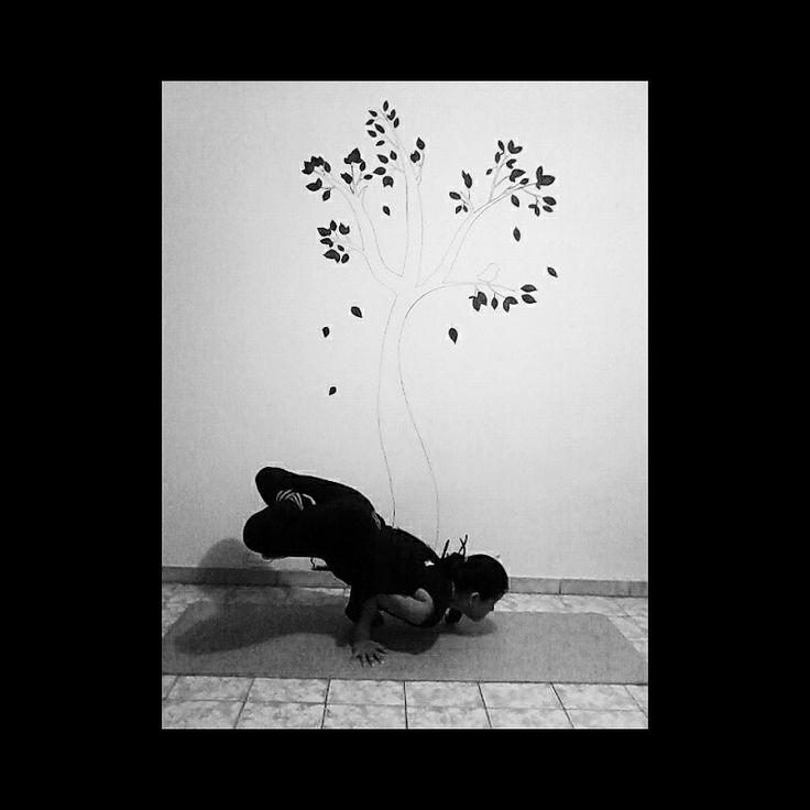 #asana  #mayurasana #lotus #yogavenezuela #yoga #yogi
