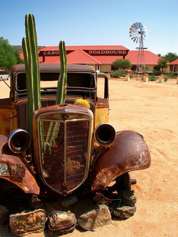 Cactus & all