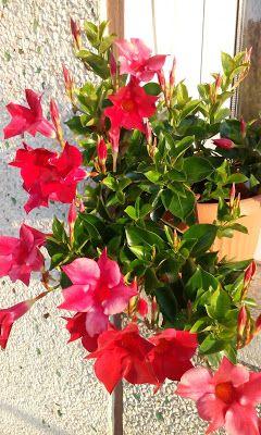 Sundaville - nowe sadzonki | Łyżka i motyka