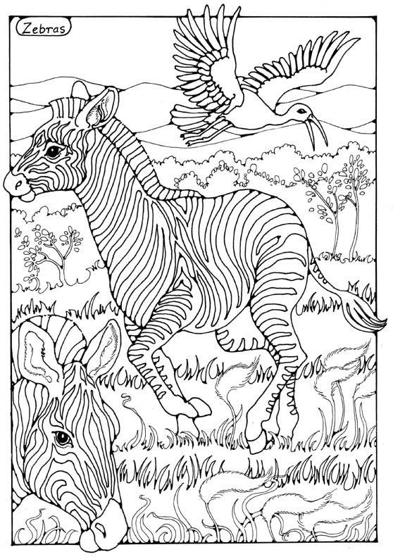 Zebras Colouring Page By Dandi Palmer