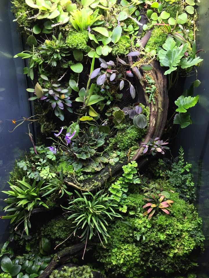 vivarium | unknown credit  https://www.facebook.com/photo.php?fbid=10100761301901845