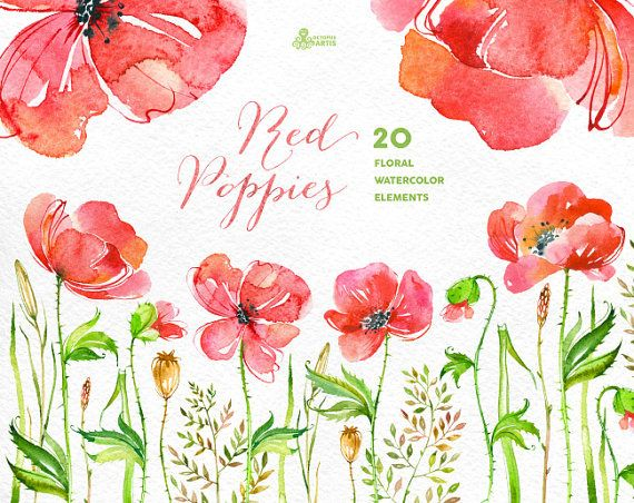 Red Poppies: 20 Elements & arrangement. Handpainted watercolor diy clipart, wedding invitation, separate floral, greeting card, red flowers