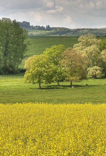 Paysage de #Lorraine by laurent jung, via Flickr  * =D *