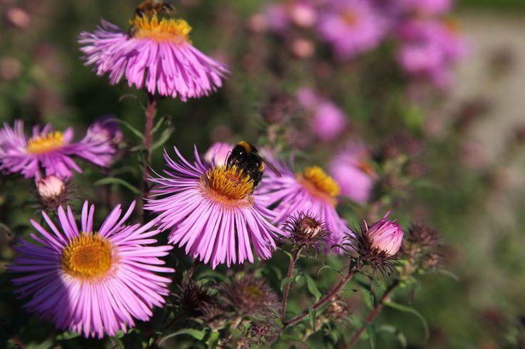 gardening welsh country magazine