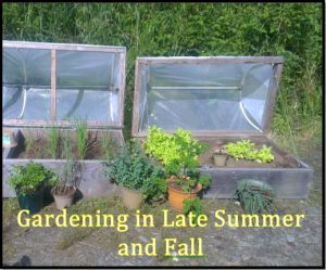 Gardening in Late Summer and Fall