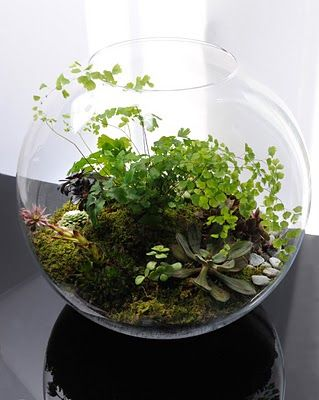 Terrarium by Grow Little, Paris. If only I could keep things like this alive.