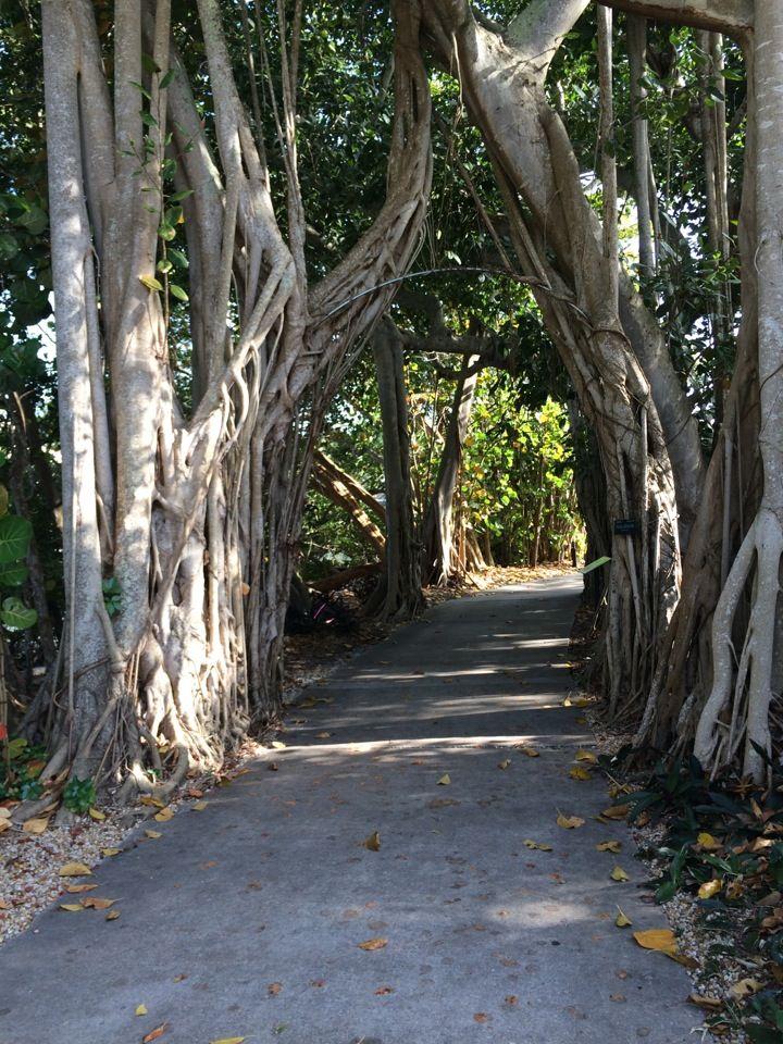 1000 Images About Sarasota Florida On Pinterest