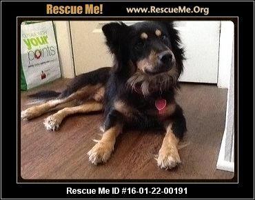 ― Texas Corgi Rescue ― ADOPTIONS ―RescueMe.Org