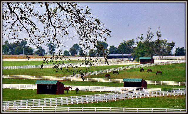 Kentucky Horse Park...Lexington, Kentucky. Ran a 5 k here...