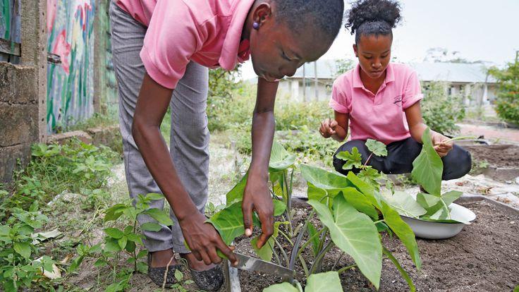 SURINAME- Leerlingen van het Maria Internaat uit de Surinaamse hoofdstad Paramaribo, oogsten groenten op hun tuin, die buiten de stad ligt.