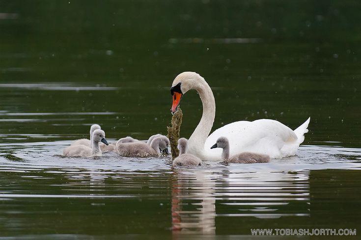 Birds | Tobias Hjorth Nature Photographer - Part 2