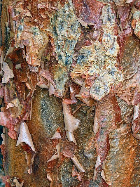 Fiona Rainford - bark