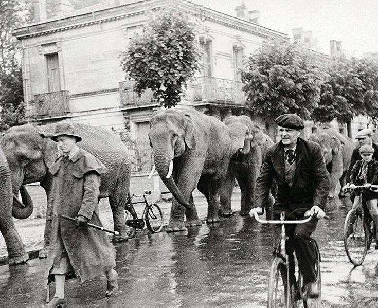 un groupe d'éléphant dans la rue de robert doisneau