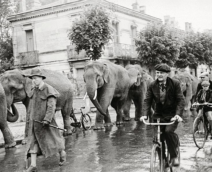 Robert Doisneau  //   Elephants on the road © Atelier Robert Doisneau