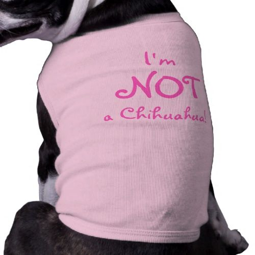 Min Pins ARE NOT Chihuahuas!