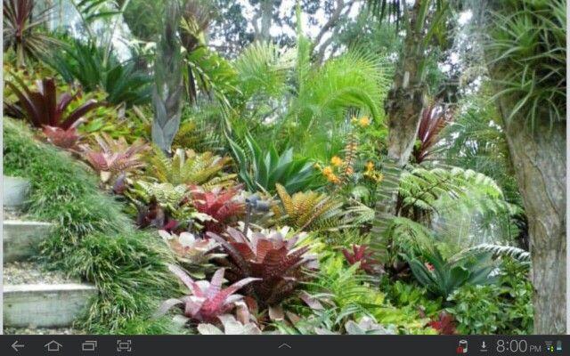 Bromeliads paradise
