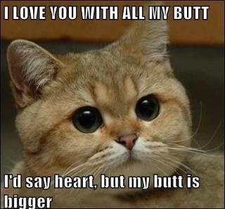 .: Funny Pictures, Funny Cat, Animal Humor, Funny Stuff, Fashion Quotes, So Funny, Animal Funny, Funny Comment, Cat Memes