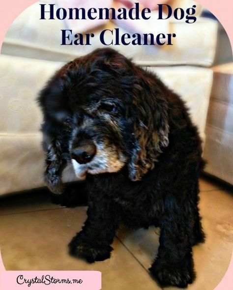 how to clean dogs ears with squirt bottle