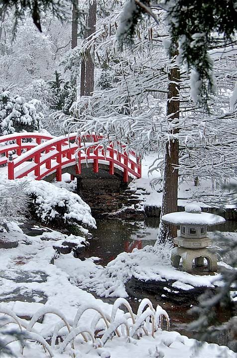 """Japanese-style arched bridge and Yukimi """"snow-viewing"""" lantern in the Asiatic Arboretum, Duke Gardens"""