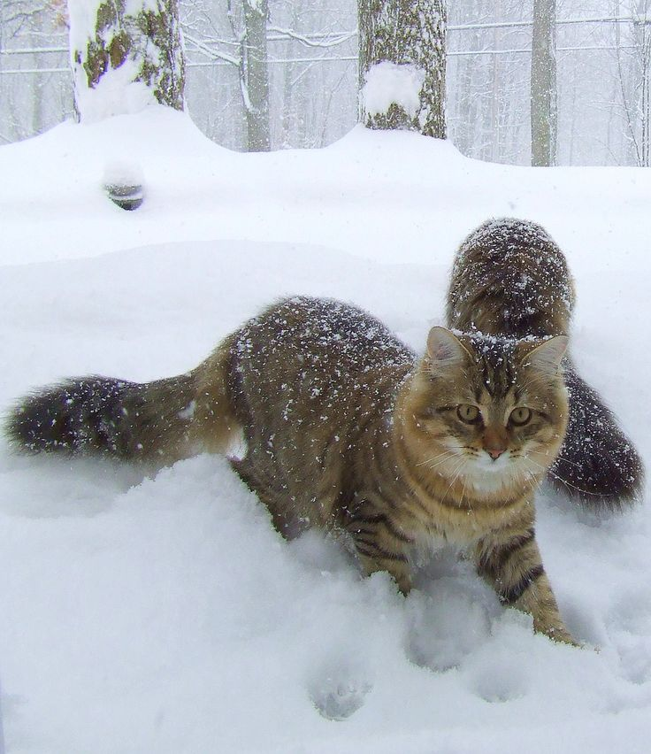 https://flic.kr/p/4bcewe | Snow Day!  YIPPEE!! | Brothers Wiki and Cocoa discover snow is really, really COOL!  From jumping, leaping, digging and burrowing, catching snowflakes and making pawprints, this is the most fun they've had all week!