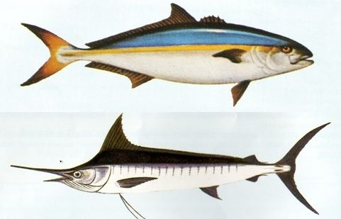 Name and type of fish in the deep sea fishing