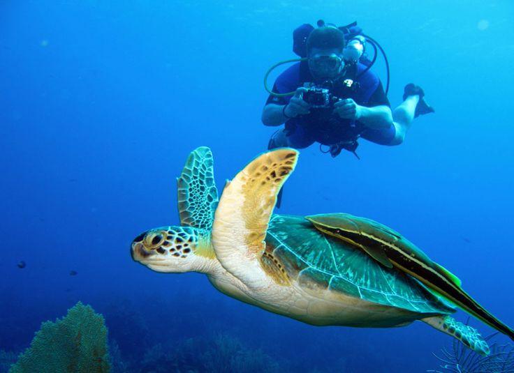 Scuba Diving in Playas del Coco Beach Guanacaste Costa Rica