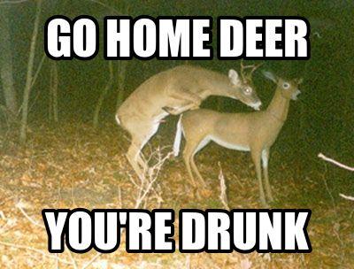 0e96613ac89a67cb2eba9daec92df043 deer so funny 11 best deer meme's images on pinterest funny stuff, animals and,Funny Deer Memes