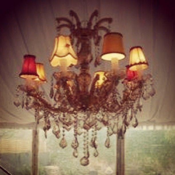 Gold chandelier!! Lush Lighting Adelaide