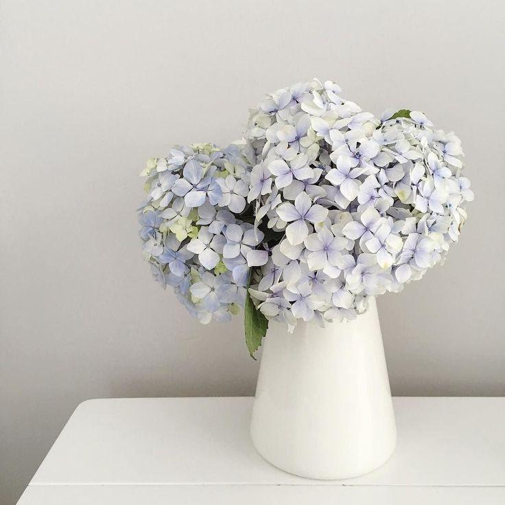 Perfect summer hue and flower #hydrangea #freshstart #madefromscratch