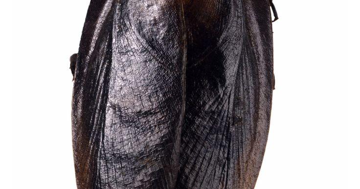 Cómo preparar cebo exterminador para cucarachas. Las cucarachas son una problema de peste común tanto dentro como fuera de la casa. No sólo son insectos desagradables, también llevan y transmiten un número de enfermedades. Mientras que están en venta muchos cebos y venenos para matar cucarachas, puedes preparar tu propio cebo exterminador en casa. La receta incluye comidas que atraen a las ...