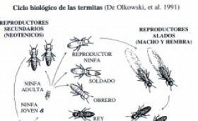blog sobre ecologia y medio ambiente