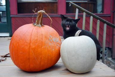 © 2011 Dorann Weber / Getty Images Where Did Black Cat Superstitions Originate?