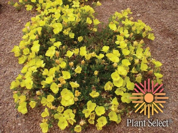 colorado native plants | ... the follow six herbaceous plants and one woody plant in 2010