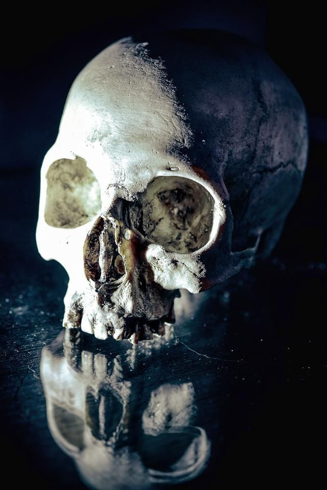 1000+ ideas about Human Skull on Pinterest | Crystal skull ...